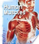 Human Muscles