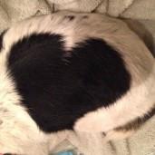 beagle.mama