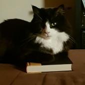 BookBelle84