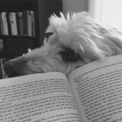 Bookish.SAM