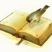 a.bookish.byrd