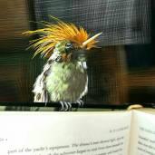 LittleHummingbird