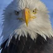 EagleReader