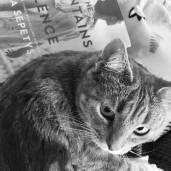 kitteh_reads